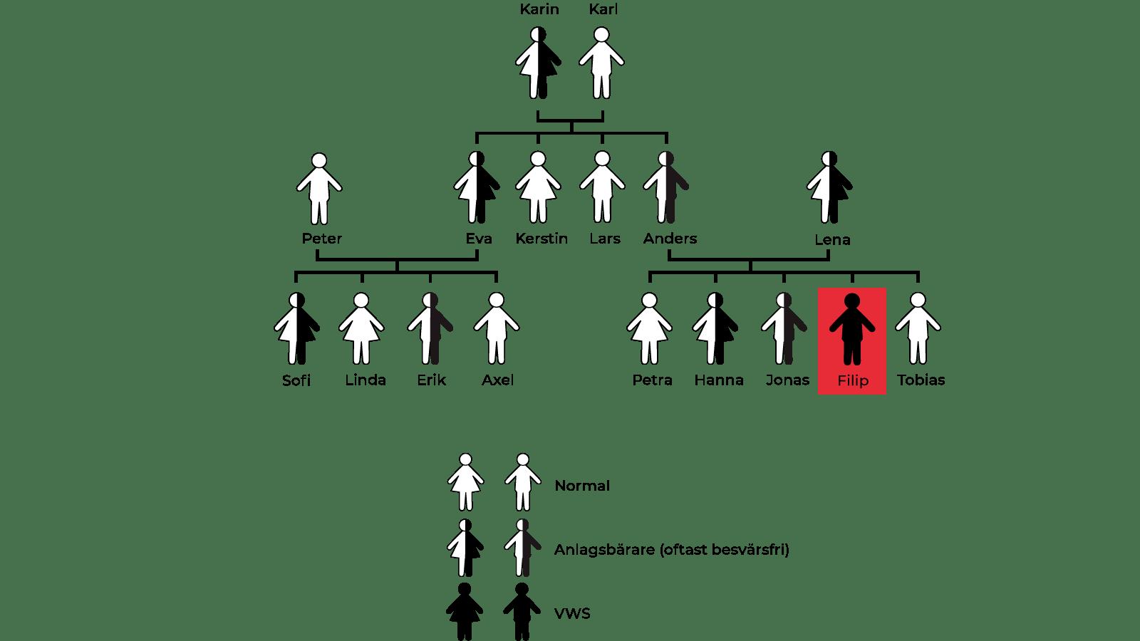 transparent family tree big